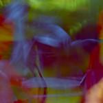 ExperimentalArtMartialFilm_18.mov