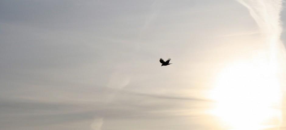 Bird_JVaude
