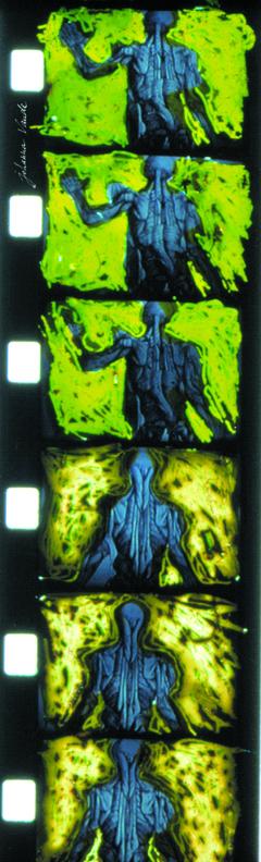 totalité film de johanna vaude super 8 peinture sur pellicule écorchés de vesale