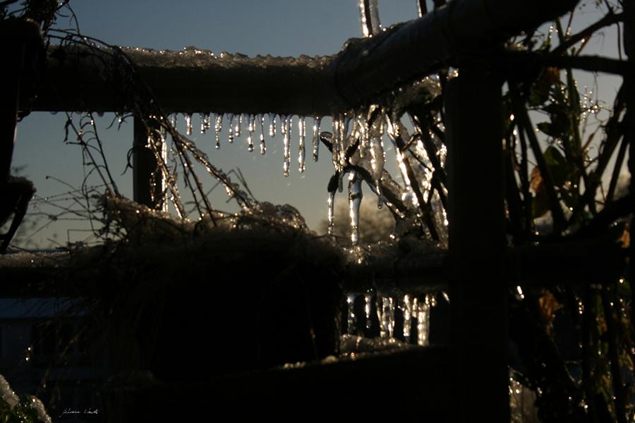 hiver gel photo par johanna vaude