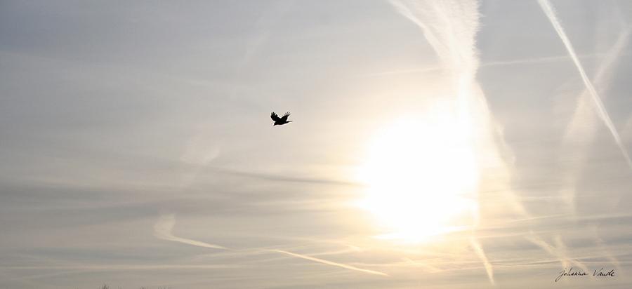 Oiseau au vol par johanna vaude photo hiver