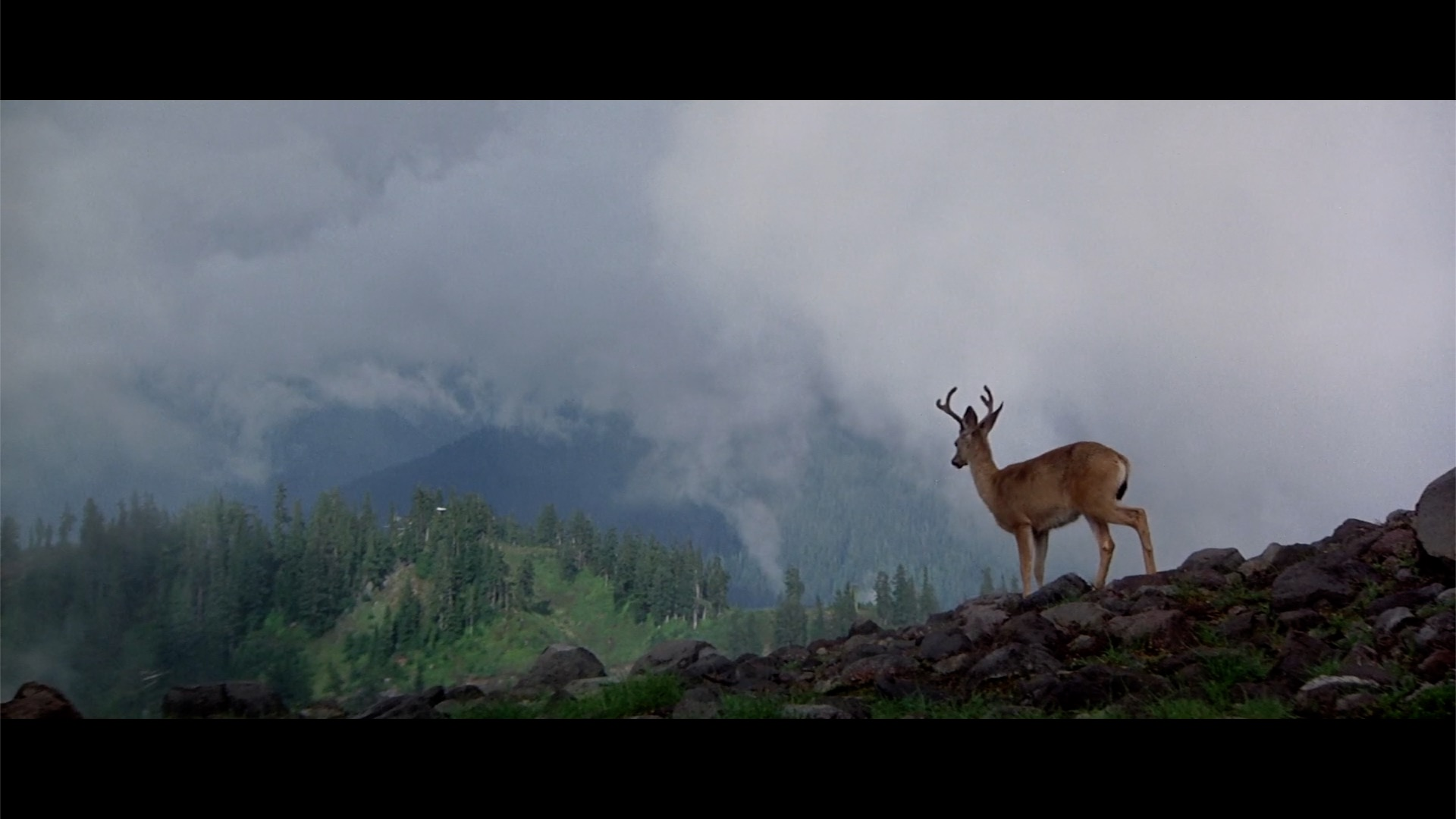 michael cimino the deer hunter