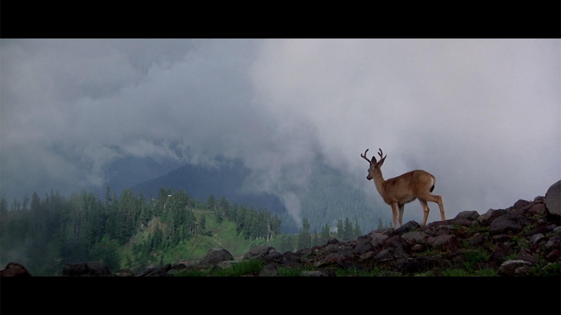 michael cimino the deer hunter